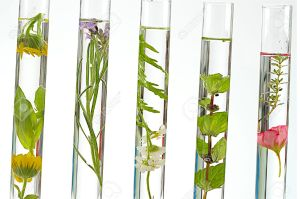 25987483-solution-of-medicinal-plants-and-flowers-Decorative-Objects-flowers-on-test-tubes--Stock-Photo